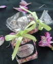 Miss Nang Treats - Foodies snackss - purple lime - web5